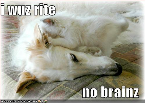 funny-pictures-kitten-was-right-about-dog-having-no-brains2