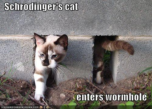 funny-pictures-the-cat-of-schrodinger-enters-a-wormhole